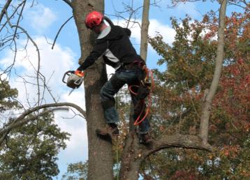 alpinistyczna wycinka drzew dr drwal (1)