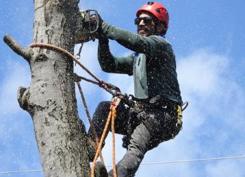 alpinistyczna wycinka drzew dr drwal