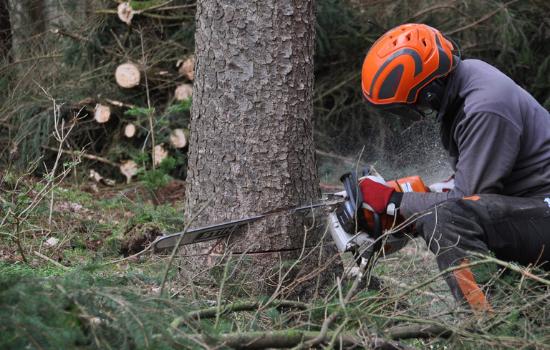 profesjonalna wycinka drzew dr drwal