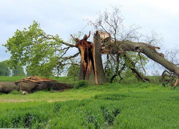 przewalone drzewo po burzy dr drwal