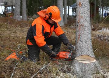 wycinka drzew dr drwal (1)