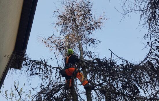 DrDdrwal wycinka drzew