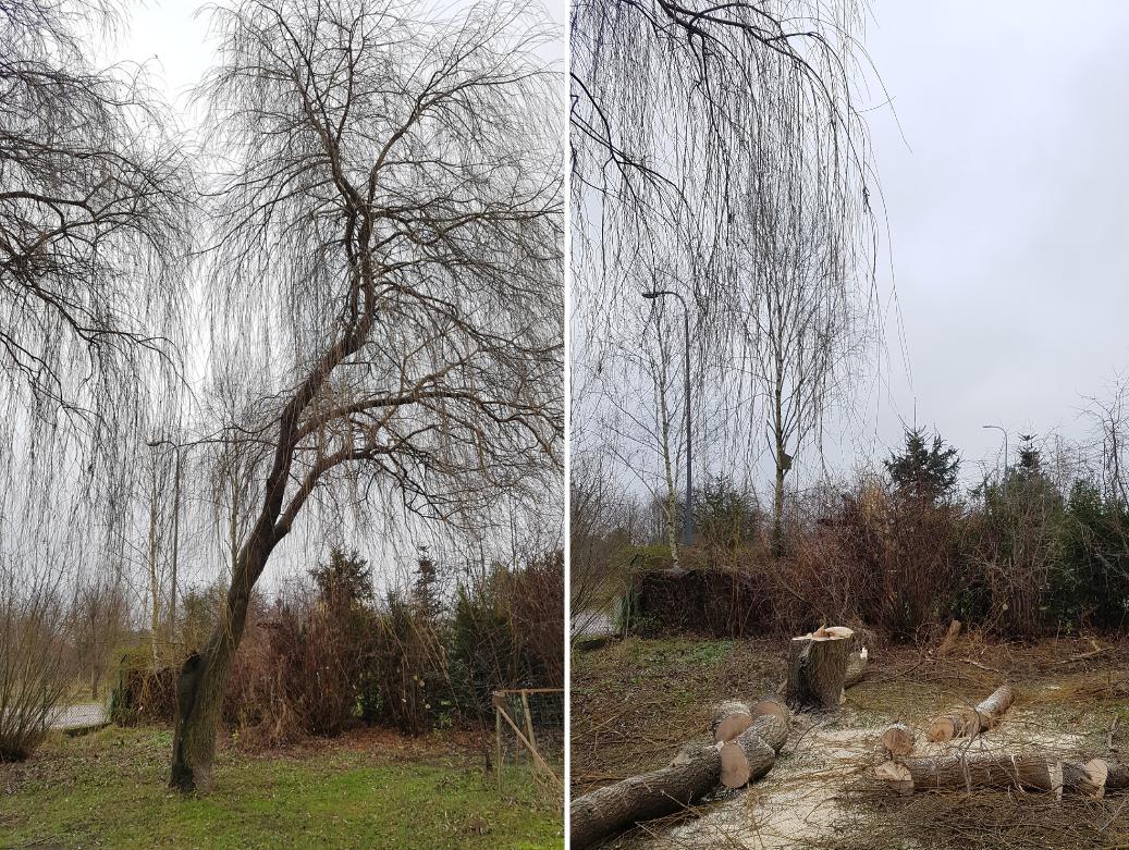 Drdrwal.pl Wycinka i pielegnacja drzew 01