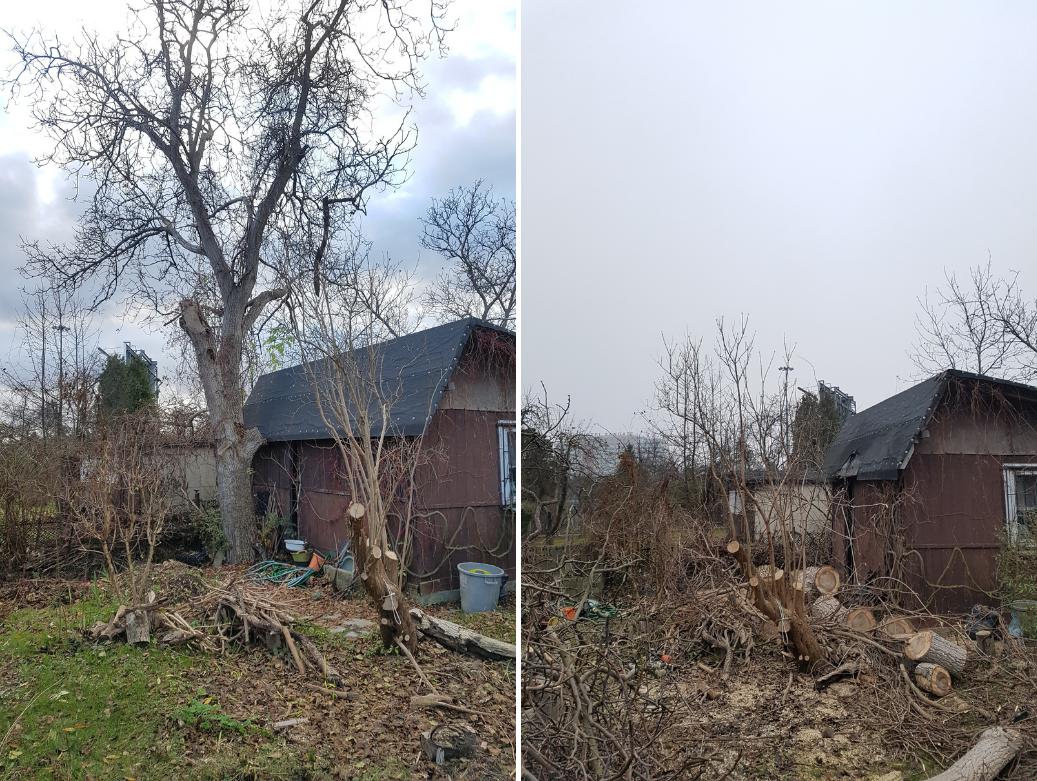 Drdrwal.pl Wycinka i pielegnacja drzew 02