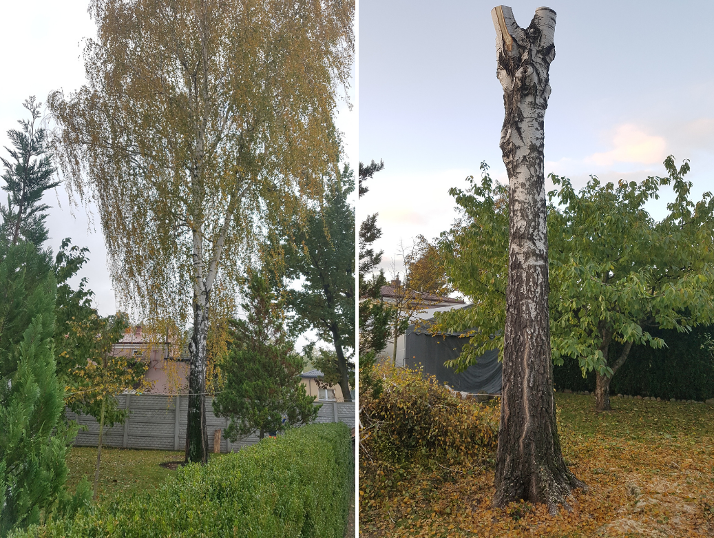 Drdrwal.pl Wycinka i pielegnacja drzew 03