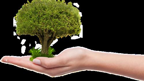 Przesadzanie drzew drdrwal