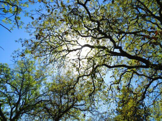 pasja pielęgnacja drzew drdrwal