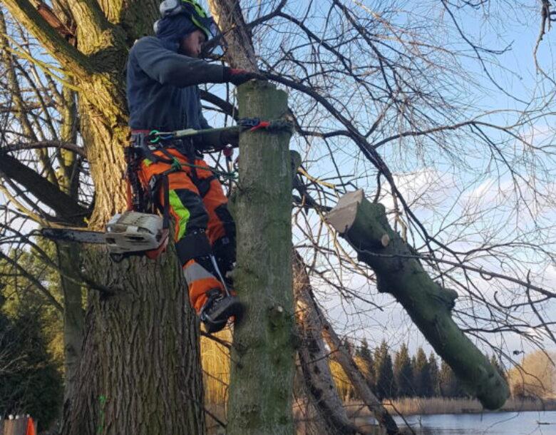 wycinka i pielęgnacja drzew DrDrwal warszawa
