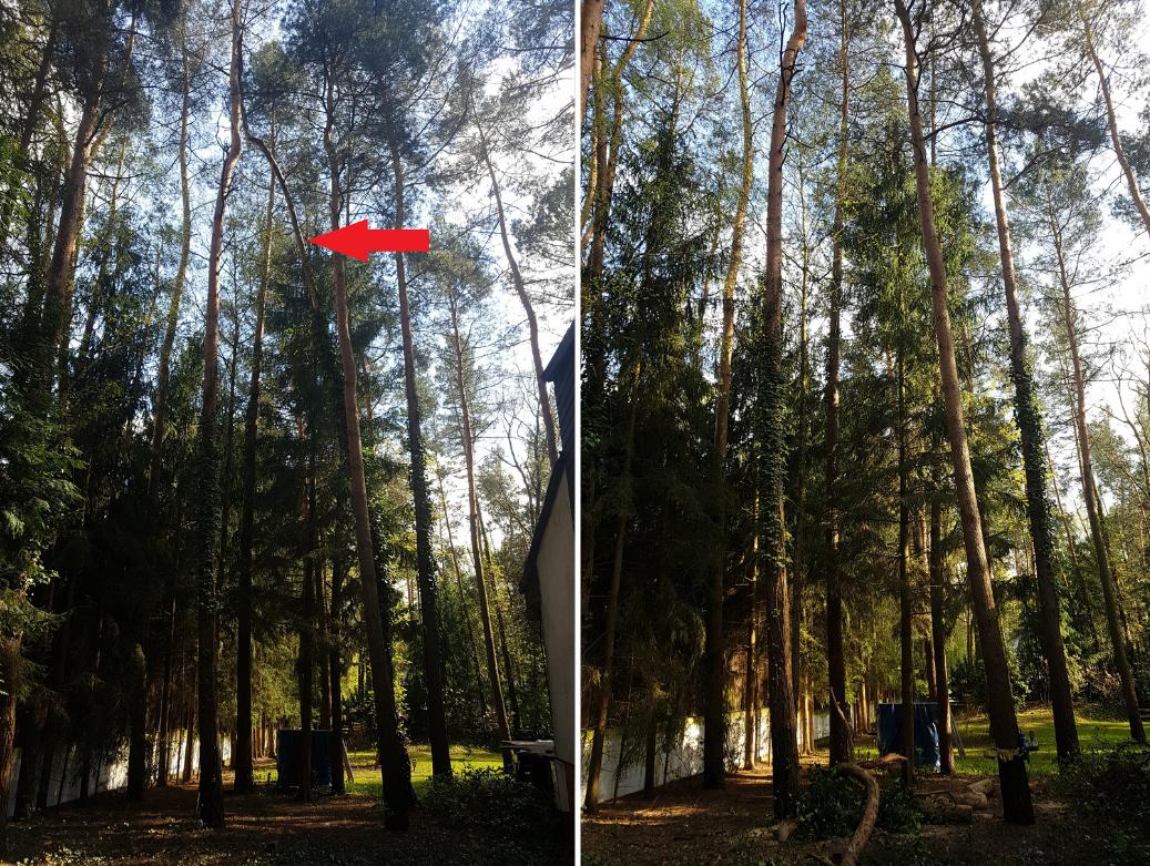 Drdrwal.pl Wycinka i pielegnacja drzew 002